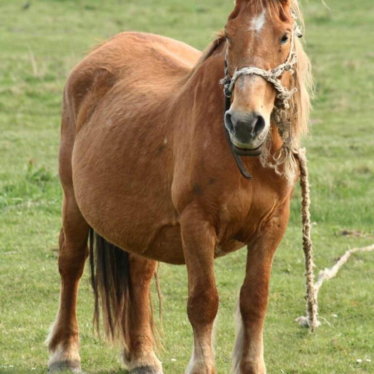 Brown horse on lead in pasture