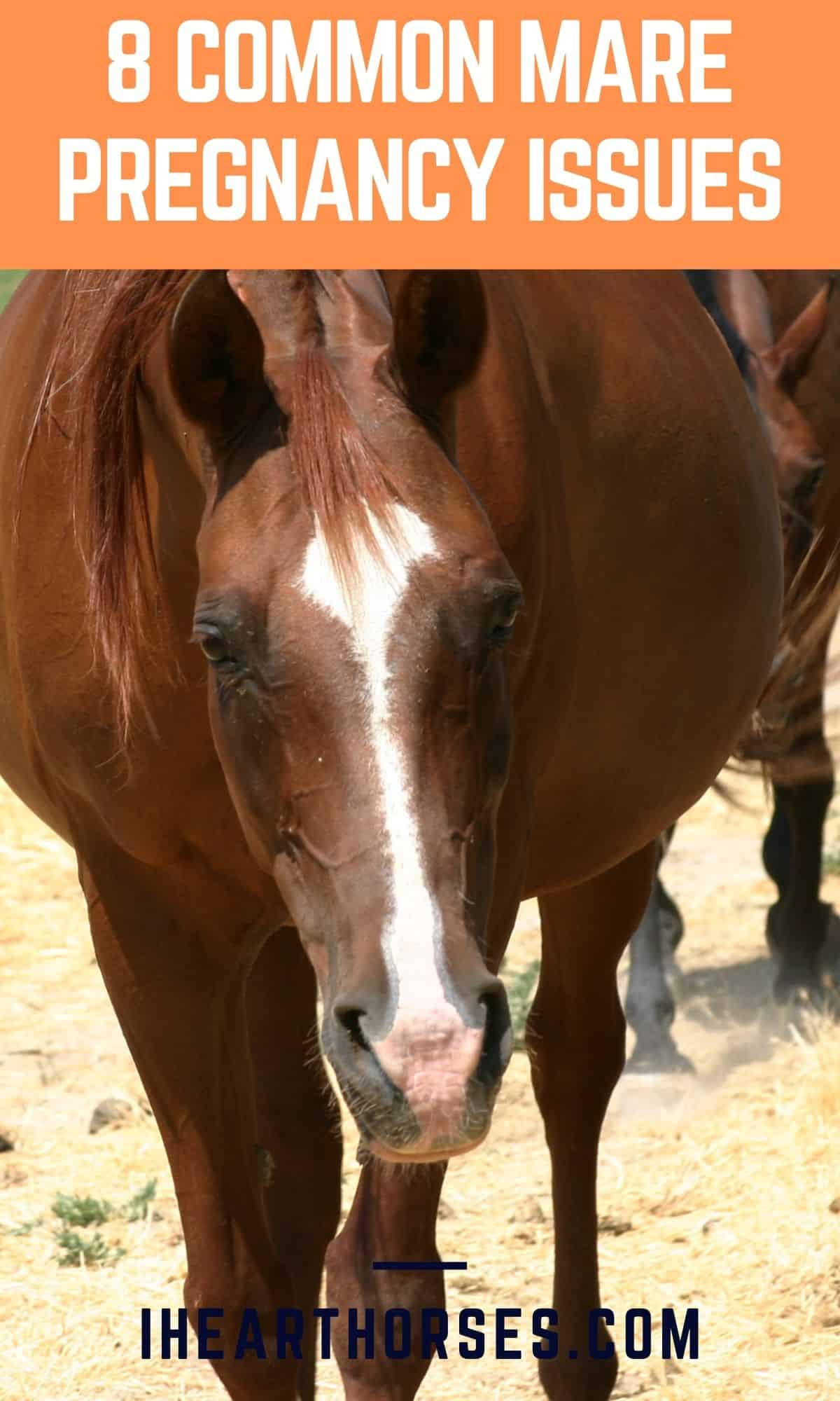 Brown pregnant mare with orange banner on top of image that says 8 common mare pregnancy issues