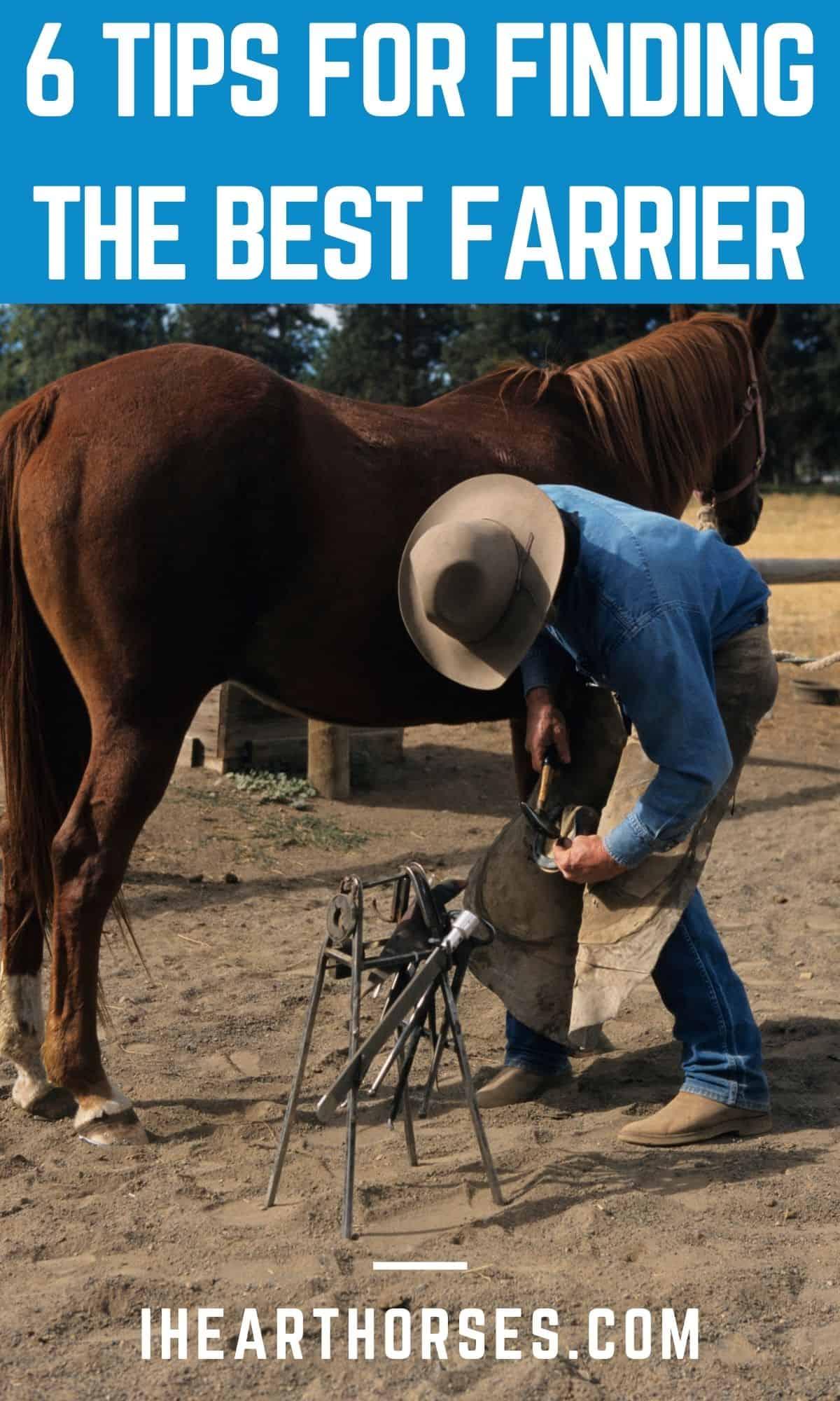 Man in blue shirt putting shoe onto horse