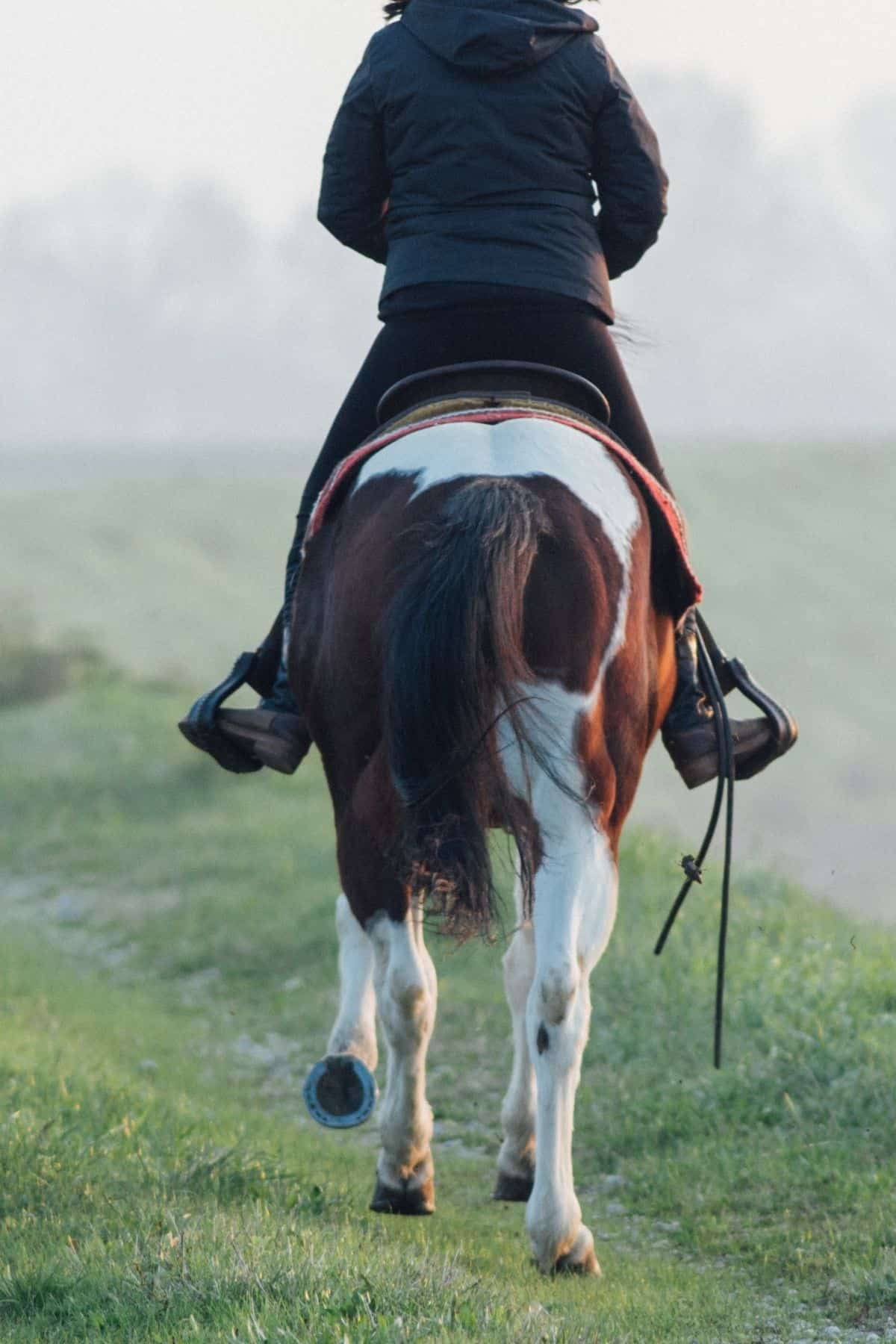 Back of horse with rider in black