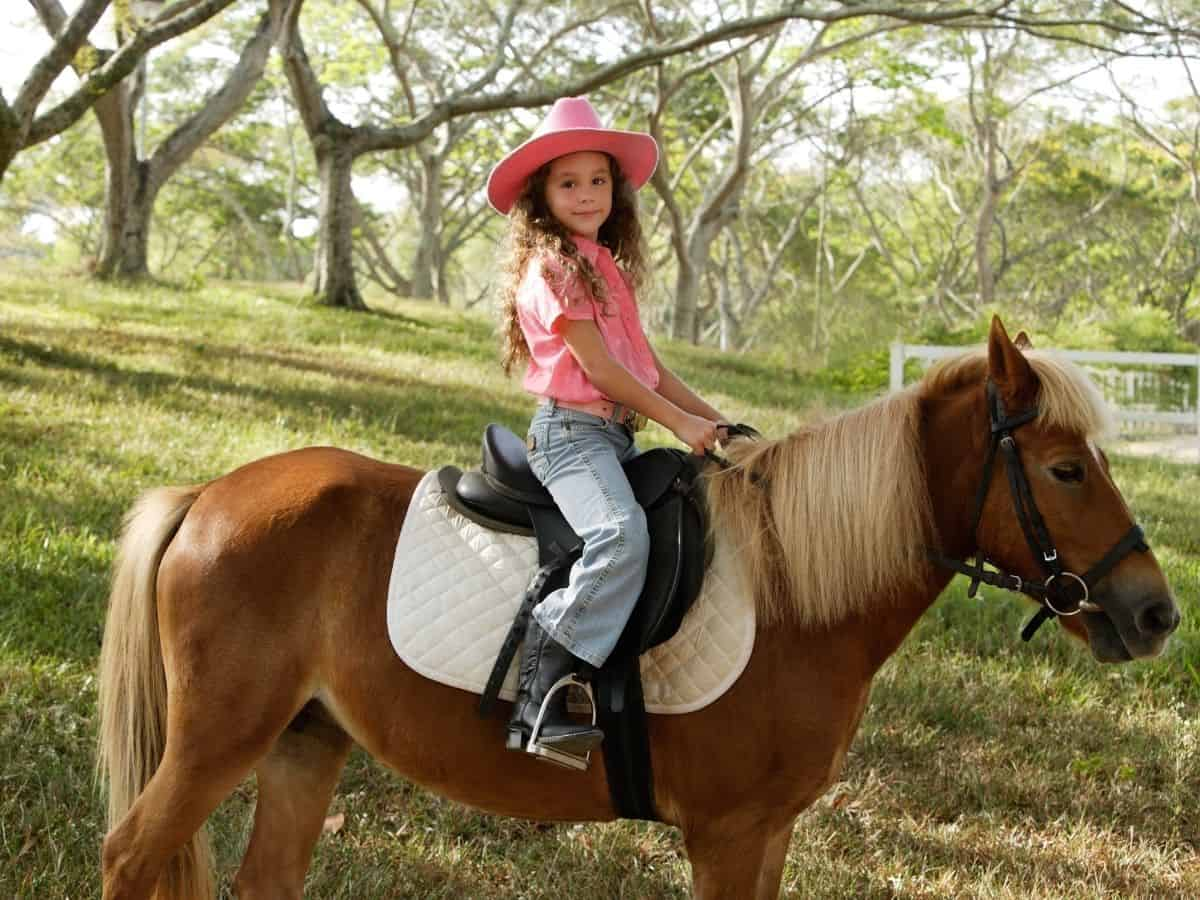 Little girl in pink on brown horse