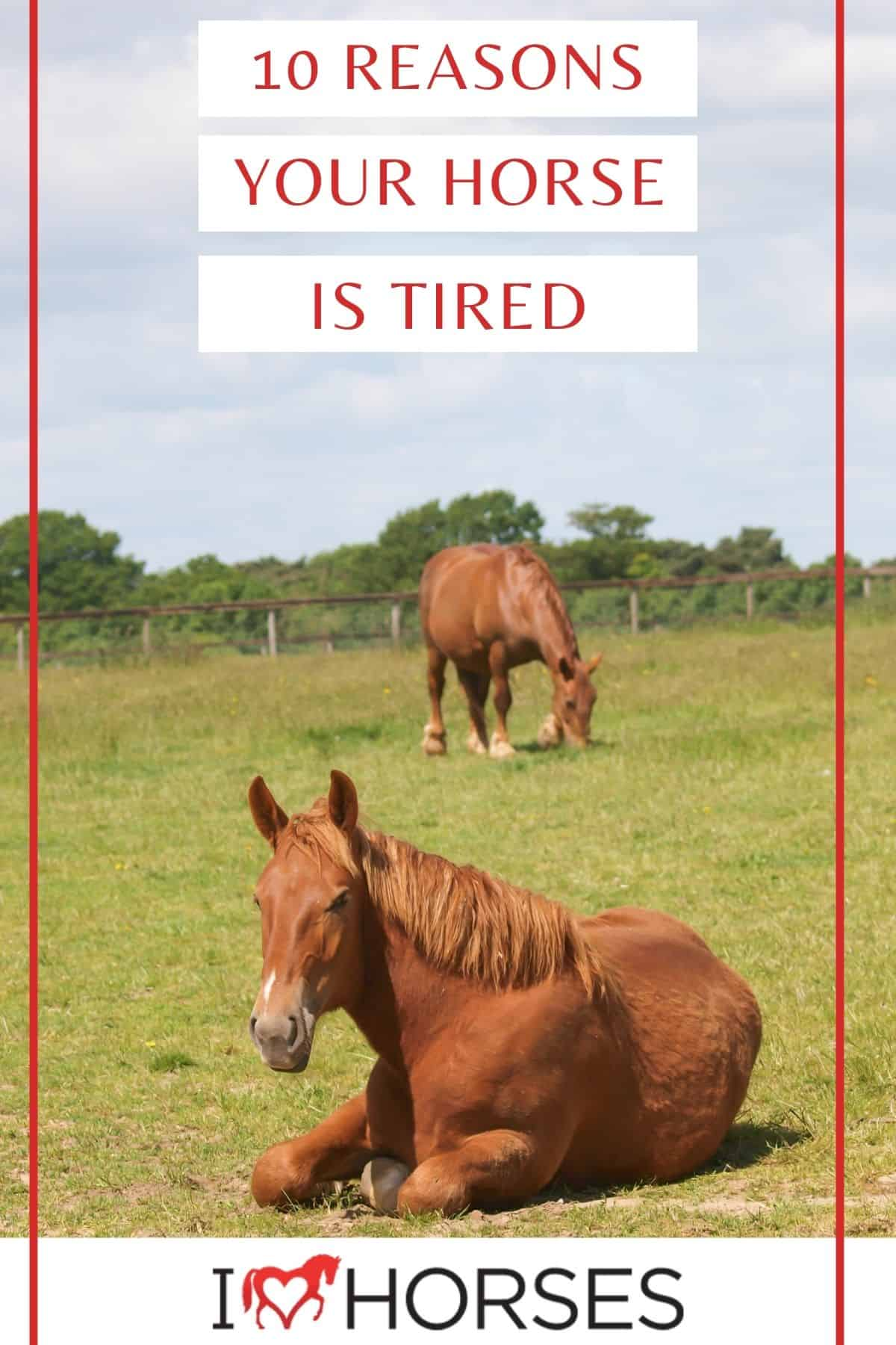 Pinterest image that says 10 reasons your horse is tired in red over white banners with horse sitting in foreground