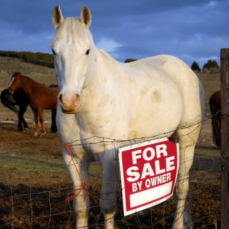 White horse by fence with for sale sign