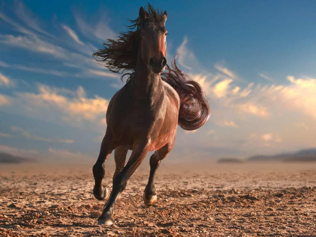 Brown horse running in sand with cloudy sky