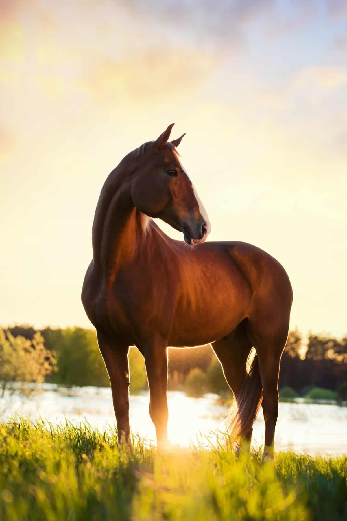 Brown horse standing in riverbed