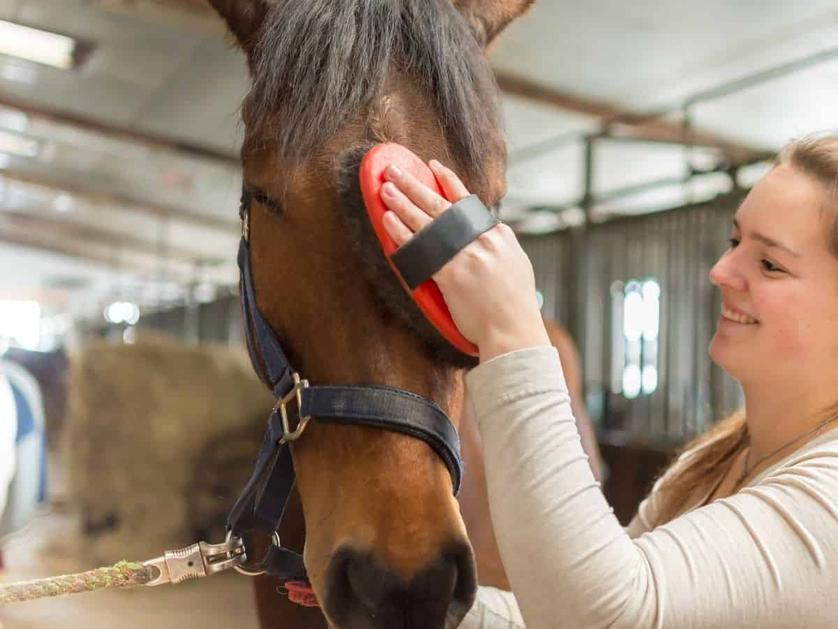 Woman brushing horses face with red comb