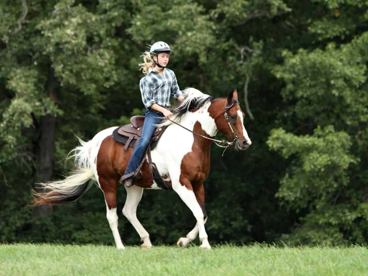 Woman in plaid riding brown and white horse
