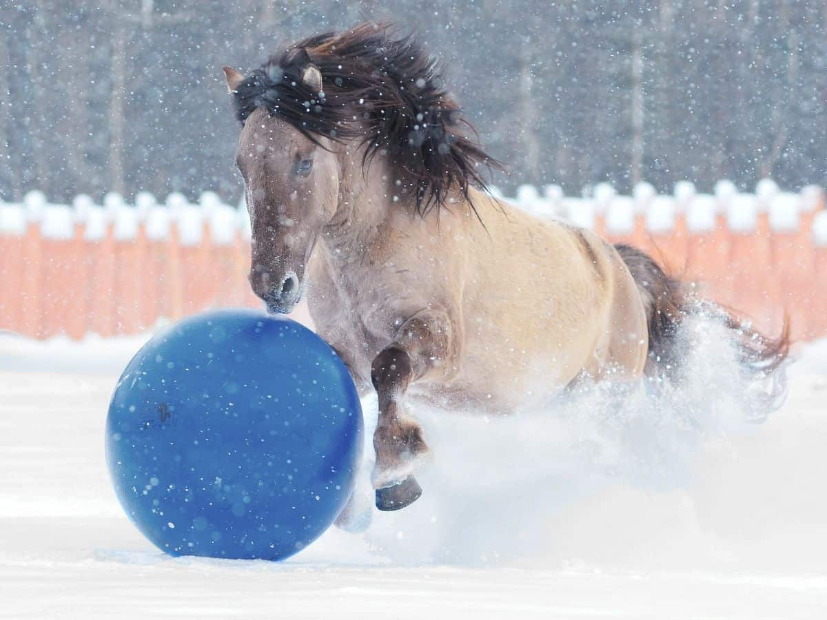 Horse in snow with big blue ball