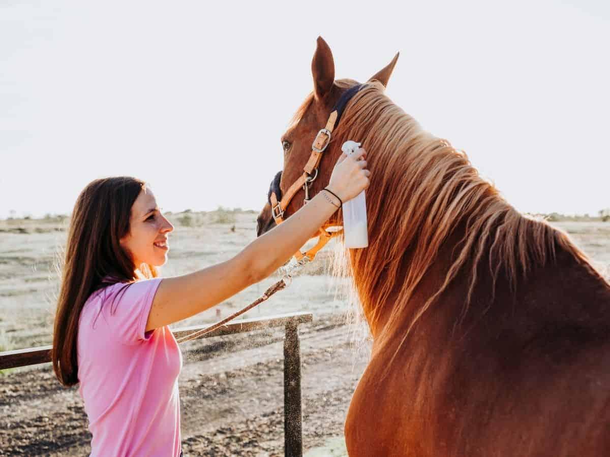 Woman in pink spraying something on brown horse mane