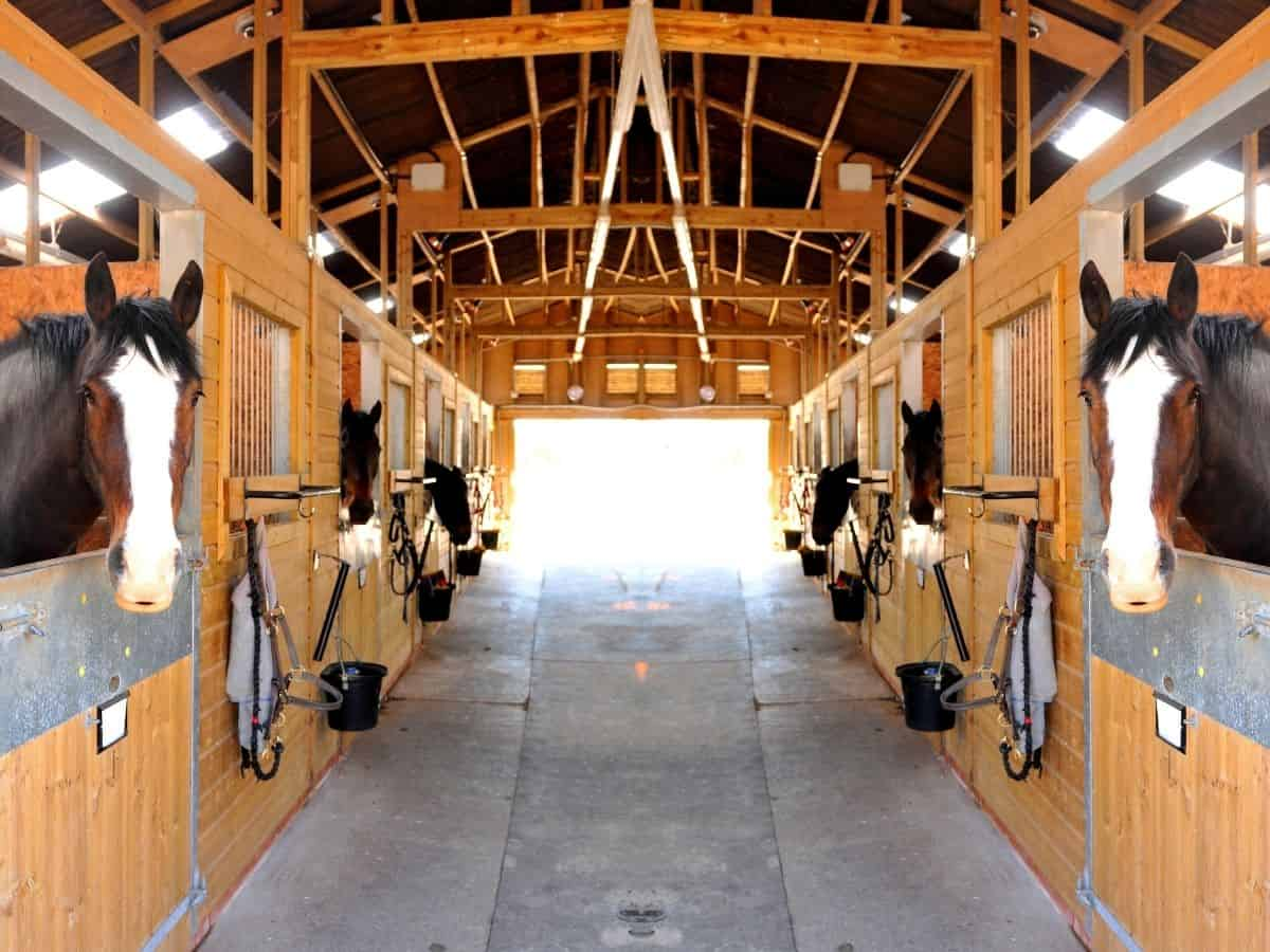 View into barn with horses looking out of stalls