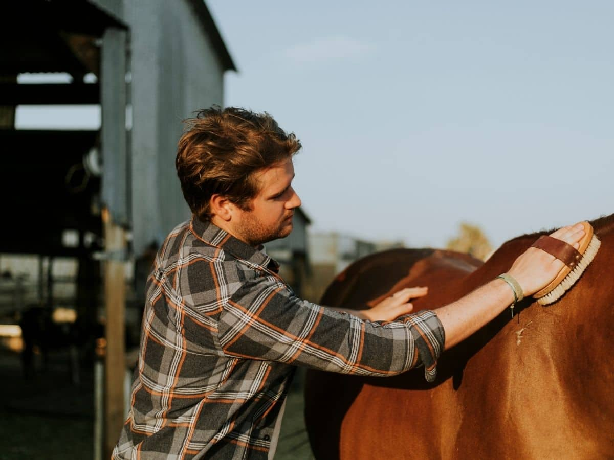 man in plaid grooming a brown horse
