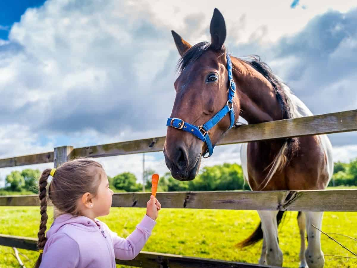 child in pink feeding carrot to brown horse over fence
