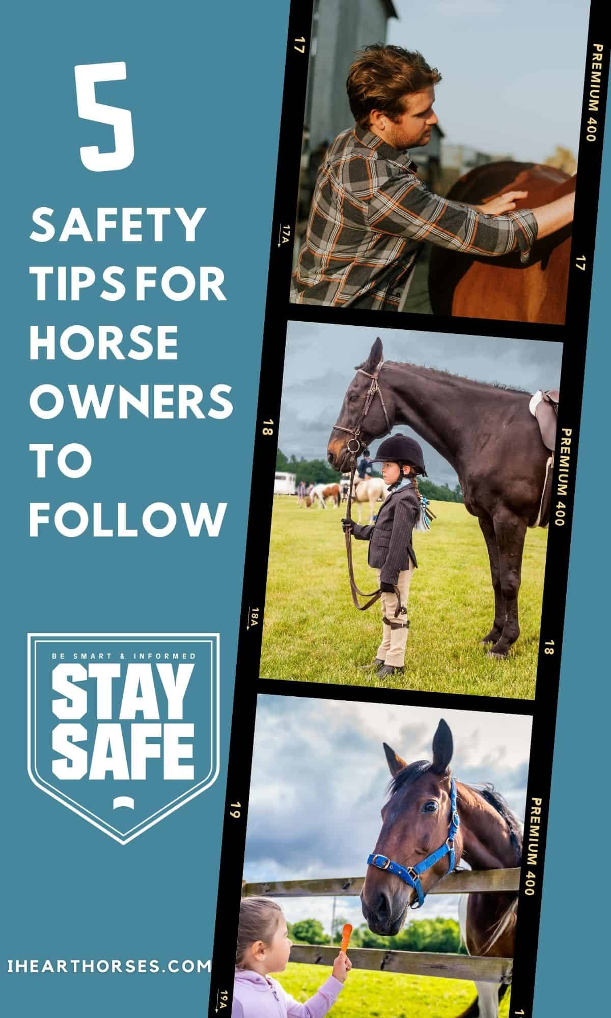 Pinterest horse collage image