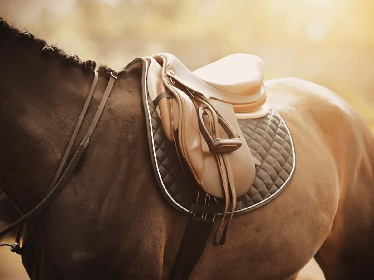 Saddle on brown horse
