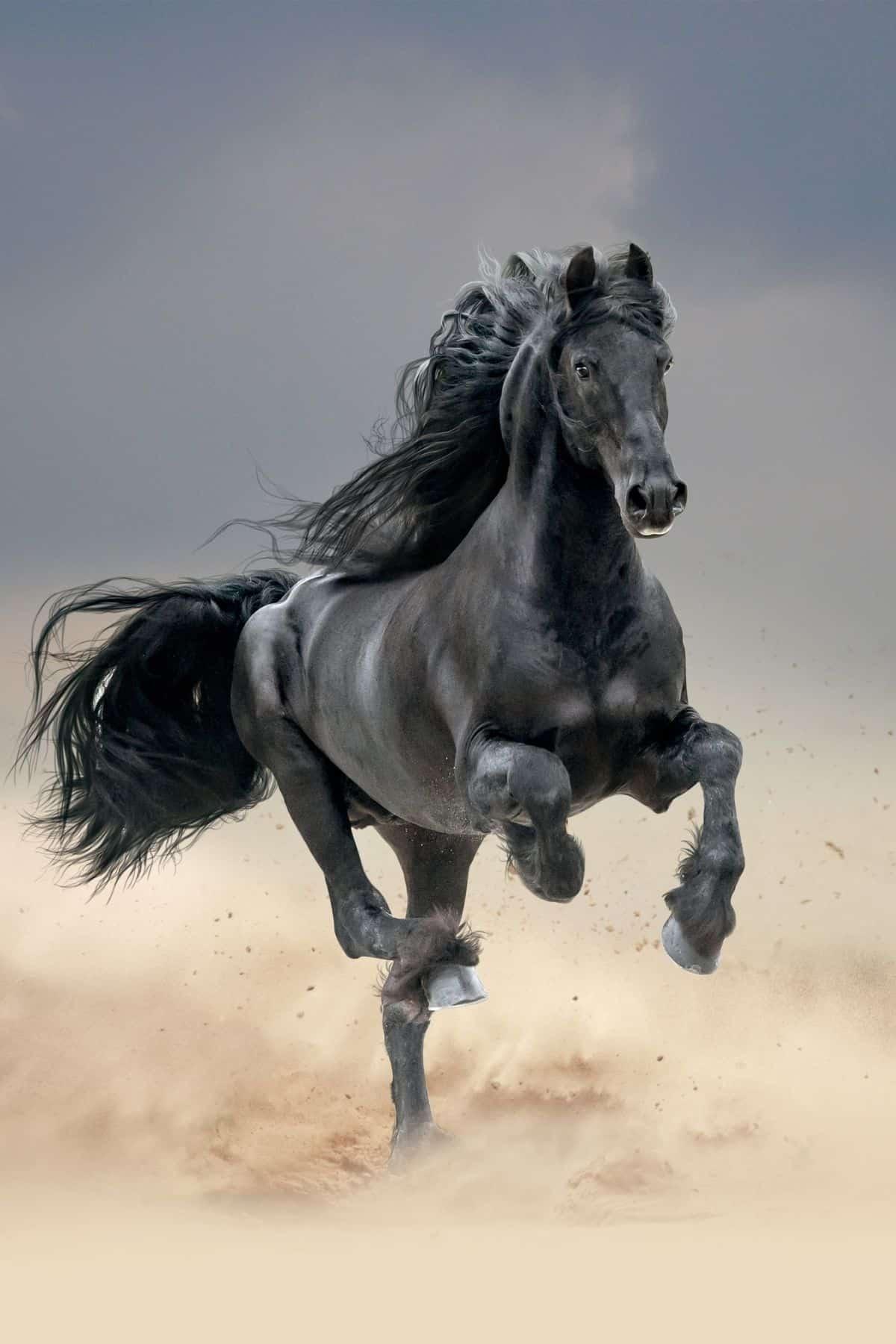 Black horse running in field