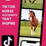 pinterest image with collages and overlay sayng 17 tiktok horse accounts that inspire