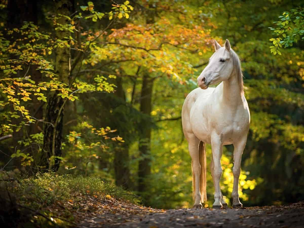 white horse on road by fall leaves on trees