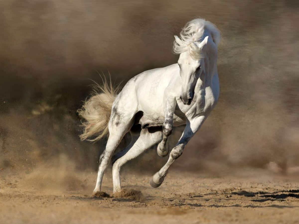 white horse running in dirt storm
