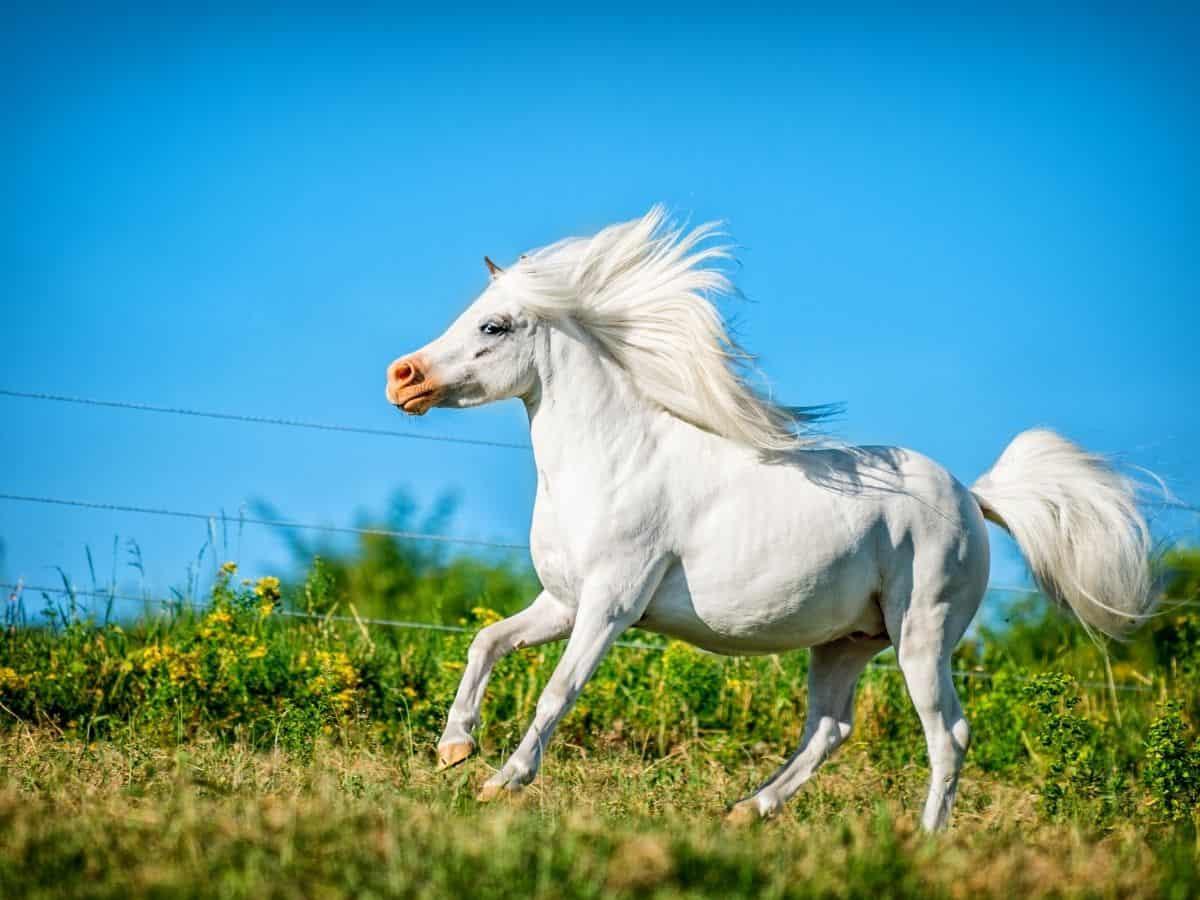 white horse running in grass