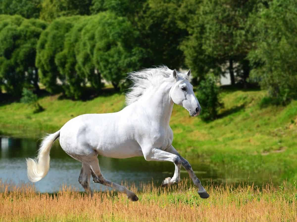 horse running in grass by water