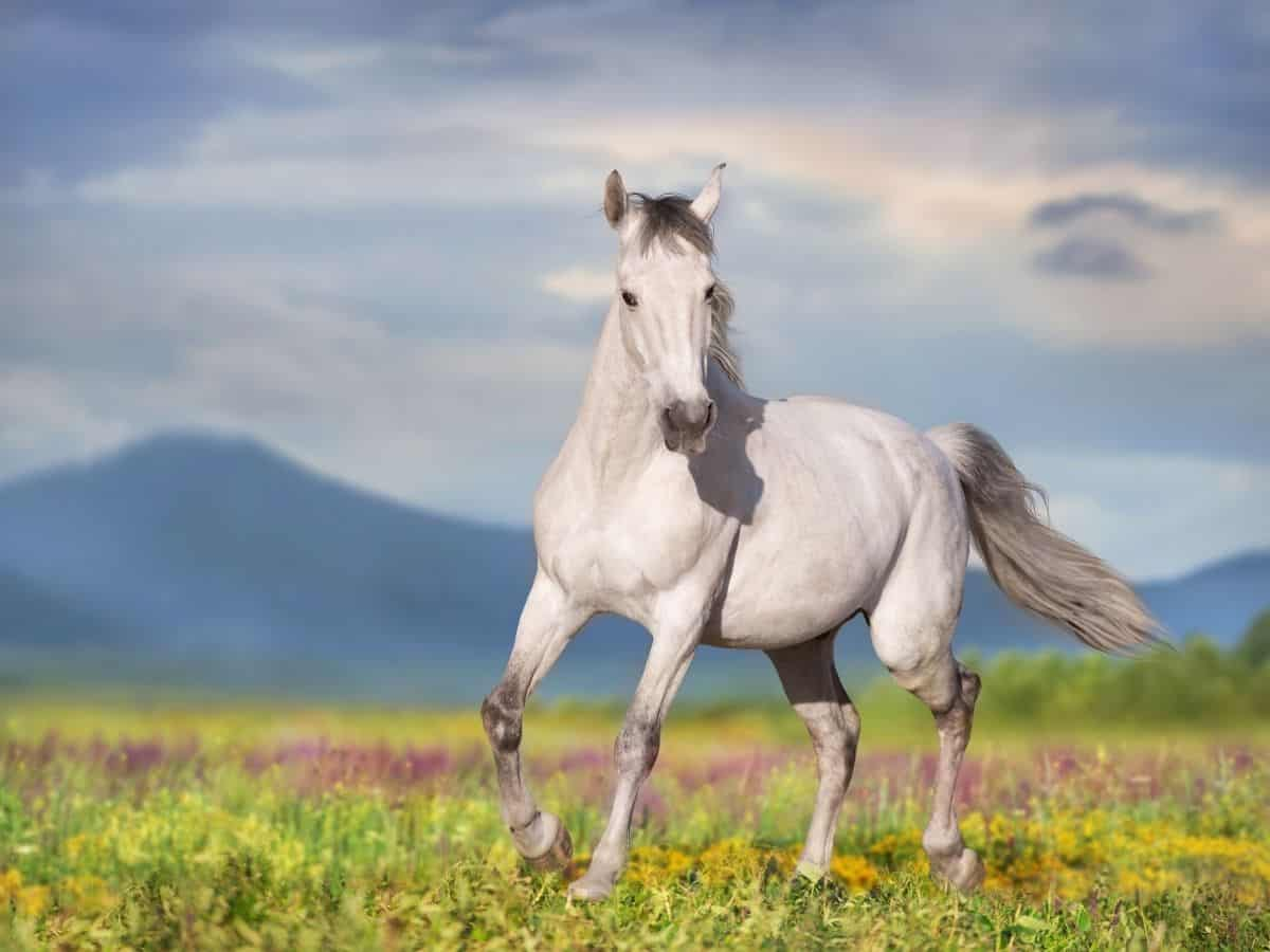horse in field of flowers with blue background
