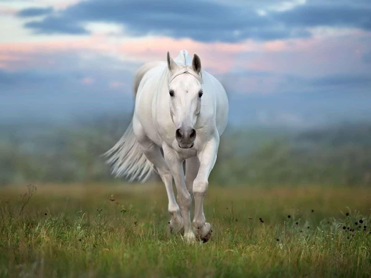 horse in grass running toward camera
