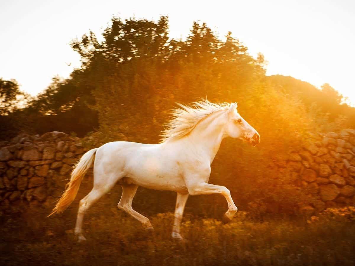 white horse against trees at sunset