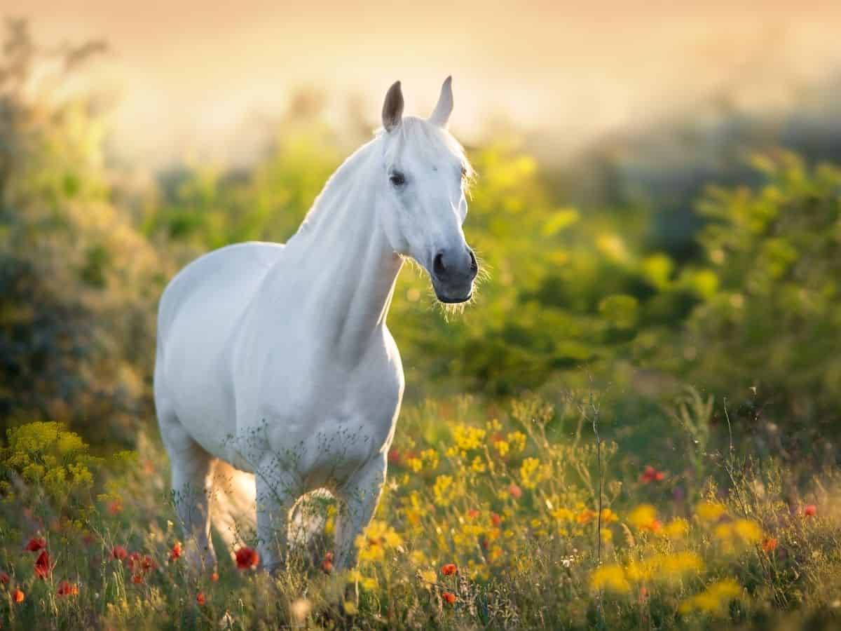 horse in grassy field at sunset