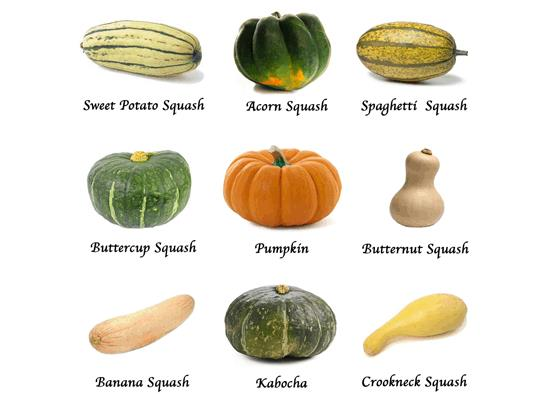Variety of Fall and Winter Squash