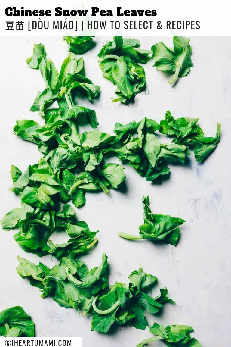Chinese snow pea leaves/snow pea tips/pea shoots stir-fry recipe from I Heart Umami.