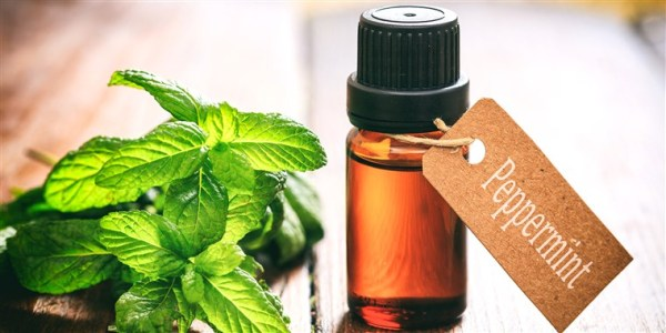 Peppermint for Hair Growth