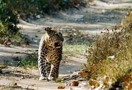 Panna National Park , Madhya Pradesh