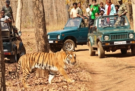 Pench National Park , Madhya Pradesh