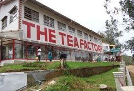 Tea Museum, Ooty