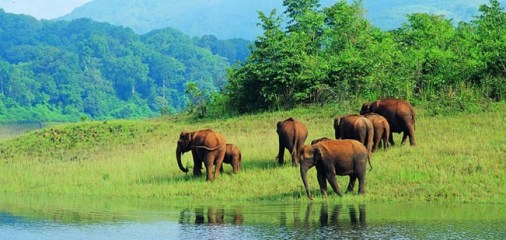 Image result for Periyar National Park, Kerala