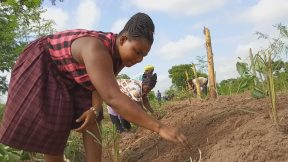 Reforesting Ghana with Click A Tree 017