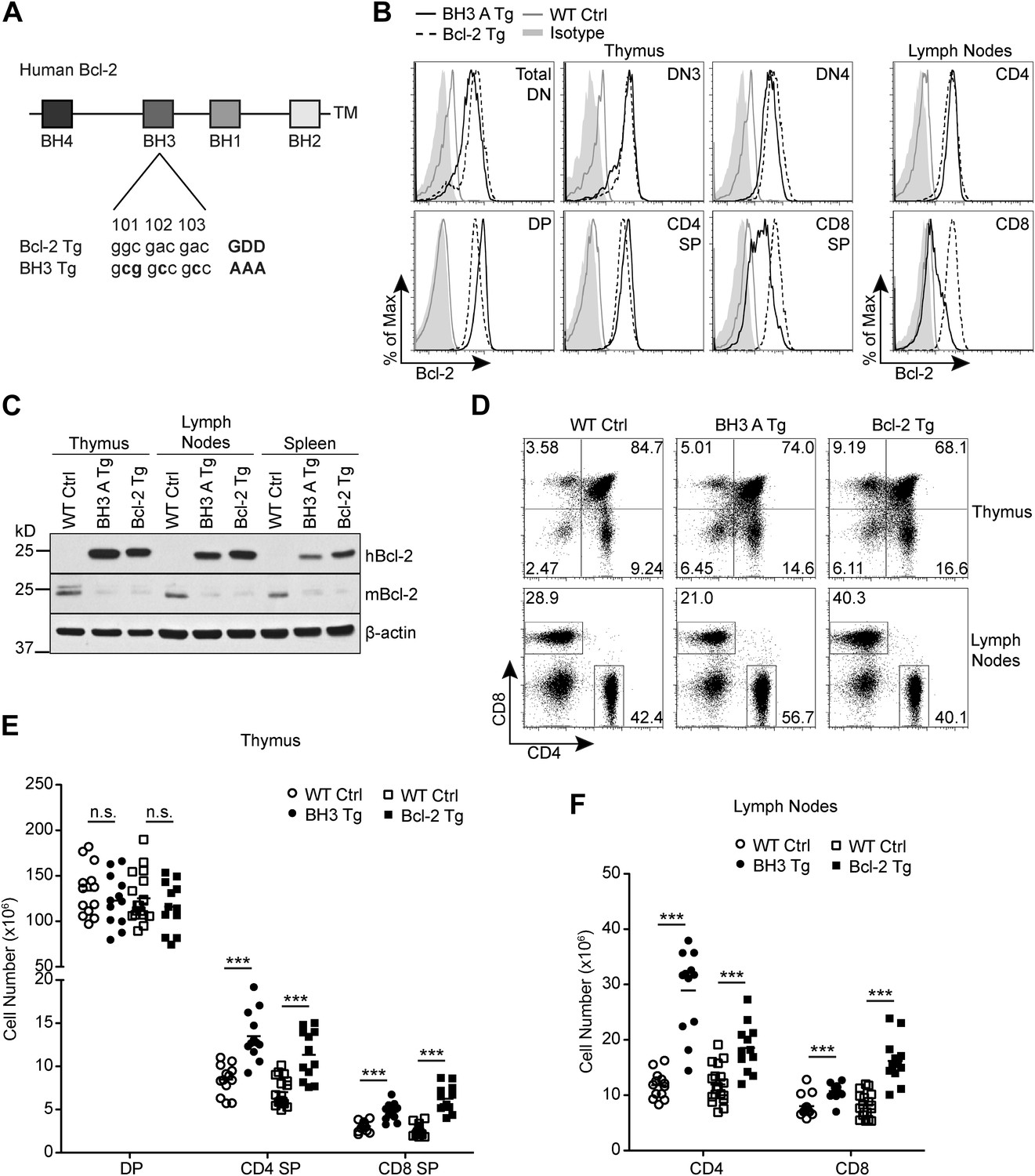 T Cell Specific Inhibition Of Multiple Apoptotic Pathways Blocks Negative Selection And Causes