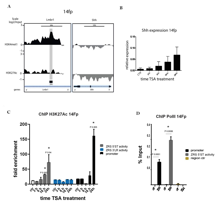 Fibroblast Growth Factors Fgfs Prime The Limb Specific