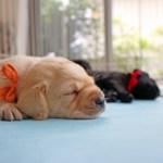 安眠快眠できるマットレス人気売れ筋ランキングとおすすめは?