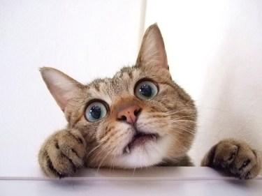 猫を飼う際、部屋の中だけと制限するとストレスの原因に!?