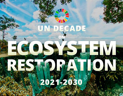 NAM welcomes the adoption of United Nations Decade on Ecosystems ...