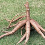 Cassava demonstrates Nigeria's economic vulnerability