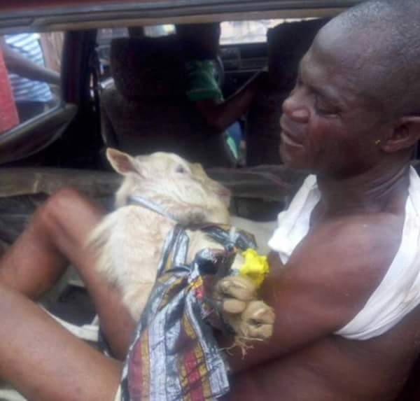 See How A Goat Thief Was Disgraced In Akure (Photos)