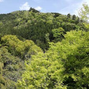 近くの大沢橋からの眺めです新緑が清々しい季節となりました週末は、ぜひ御岳渓谷&御岳山にお出かけ下さい #蔵 #筏 #ikada #japan #Tokyo #mitake #御岳 #御岳山#mitakesan #御岳山ロックガーデン #武蔵御嶽神社 #多摩川 #御岳渓谷 #奥多摩 #ブドウ山椒 #おにぎり #tasty #バイク #ロードバイク #カヌー #カヤック #リバーSUP #デッドエンド #ジムニー #ペット可 #新緑
