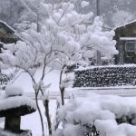 芽だけしかないミツバツツジもまるで雪の花が咲いた様今日は16時ぴったりに閉めさせていただきました営業時間11~16時 東京都青梅市御岳2ー313 木曜定休#蔵 #筏 #ikada #japan #Tokyo #mitake #御岳 #御岳山 #mitakesan #多摩川#御岳渓谷 #御嶽駅 #奥多摩 #ブドウ山椒 #おにぎり #スノーアタック #アルパインクライミング #ジムニー #JA22 #武蔵御嶽神社 #御岳登山鉄道 #犬 #ペット可 #雪景色
