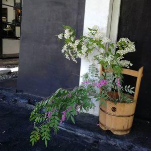 斜めお向かいさんから、今朝は夏萩と白い花木を頂きました。夏萩は風にたなびいて、たおやかです白いのは名前不明です。斜めお向かいさんの庭は広大なので全ての名前を把握していないのだそうです。カルミアは、まだまだ綺麗なので二階のギャラリーに飾りましたhttp://ikadamitake.com営業時間11~17時木曜定休(祭日は営業)#炭鳥 #蔵 #筏 #ikada #Tokyo #mitake #御岳 #御岳山 #mitakesan #御岳山ロックガーデン #武蔵御嶽神社 #多摩川 #御岳渓谷 #奥多摩フィッシングセンター #奥多摩 #ブドウ山椒 #おにぎり #味玉 #tasty #バイク #ロードバイク #カヌー #カヤック #リバーSUP #アルパインクライミング #デッドエンド #ジムニー #ペット可 #夏萩 #カルミア
