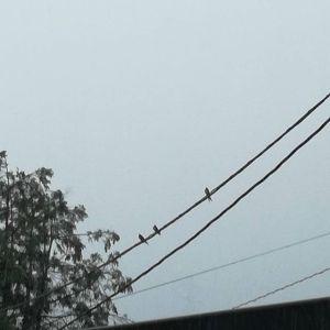 電線で豪雨に耐えるツバメたち。http://ikadamitake.com 営業時間11~17時(夏季)木曜定休(祭日は営業)※むかし鳥、ばくだんは数に限りがございます。1個からお取り置き致します♪Tel.0428-85-8726#炭鳥 #蔵 #筏 #ikada #むかし鳥 #mitake #tokyo #御岳 #御岳山 #御岳山ロックガーデン #武蔵御嶽神社 #多摩川 #御岳渓谷 #ランチ #奥多摩フィッシングセンター #奥多摩 #ブドウ山椒 #おにぎり #味玉 #バイク #ロードバイク #カヌー #カヤック #リバーSUP #ラフティング #デッドエンド #ジムニー #ペット可 #ツバメ