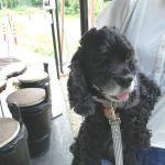 #日原鍾乳洞 にいらした帰りのご家族が #アメリカンコッカー のトゥルーちゃんとお越し下さいました@dog.small.garden.koniwan さん& @woodsmother さんのご紹介で来て下さったとの事、ありがとうございます🤗️ トゥルーちゃんは13歳のレディーですもっと若いワンちゃんと思ったくらい元気で可愛かったです🐕ご来店ありがとうございましたhttp://ikadamitake.com 営業時間11~17時(夏季)木曜定休(祭日は営業)※むかし鳥、ばくだんは数に限りがございます。1個からお取り置き致します♪Tel.0428-85-8726#炭鳥 #蔵 #筏 #ikada #むかし鳥 #mitake #tokyo #御岳 #御岳山 #御岳山ロックガーデン #武蔵御嶽神社 #多摩川 #御岳渓谷 #ランチ #奥多摩フィッシングセンター #奥多摩 #ブドウ山椒 #おにぎり #味玉 #バイク #ロードバイク #カヌー #カヤック #リバーSUP #ラフティング #デッドエンド #ジムニー #ペット可