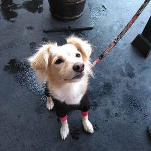 """@kaoru_ohi さんが、御岳山のロックガーデンに行かれた帰りに #雑種犬 の""""あんずちゃん""""と一緒にお越し下さいました🤗あんずちゃんは #保護犬 で、3歳の女の子ですとっても優しい目をした美人さんなあんずちゃんでした ご来店ありがとうございましたhttp://ikadamitake.com営業時間・4月〜12月 11〜17時11月末まで木曜定休(祭日は営業)※むかし鳥、ばくだんは数に限りがございます。1個からお取り置き致します♪Tel.0428-85-8726#むかし鳥 #鶏肉 #炭鳥ikada #ばくだん #mitake #tokyo #御岳 #御嶽駅 #御岳山 #御岳山ロックガーデン #武蔵御嶽神社 #多摩川 #御岳渓谷 #東京アドベンチャーライン #御岳ランチ #奥多摩フィッシングセンター #奥多摩 #日原鍾乳洞 #味玉 #串 #バイク #ロードバイク #カヌー #カヤック #riversup  #デッドエンド #ペット可"""