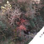 炭鳥ikadaのすぐそばの大沢橋の下に、秋の名残りの紅葉がありました。谷間で日陰なので目立ちにくいのですが、清らかな川の流れとともに、四季折々の木々の景色を楽しむ事が出来ます🏞️http://ikadamitake.com営業時間・4月〜12月11~17時金曜定休(祭日は営業)※むかし鳥、ばくだんは数に限りがございます。1個からお取り置き致します♪Tel.0428-85-8726#むかし鳥 #炭鳥ikada #ばくだん #mitake #tokyo #御岳 #御嶽駅 #御岳山 #御岳山ロックガーデン #武蔵御嶽神社 #御岳神社 #多摩川 #御岳渓谷 #東京アドベンチャーライン #御岳ランチ #奥多摩フィッシングセンター #奥多摩 #日原鍾乳洞 #okutama #バイク #ロードバイク #カヌー #カヤック #riversup  #デッドエンド #ペット可 #紅葉